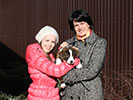 Welsh corgi cardigan puppy Zhacardi BAGRATION with his new owners